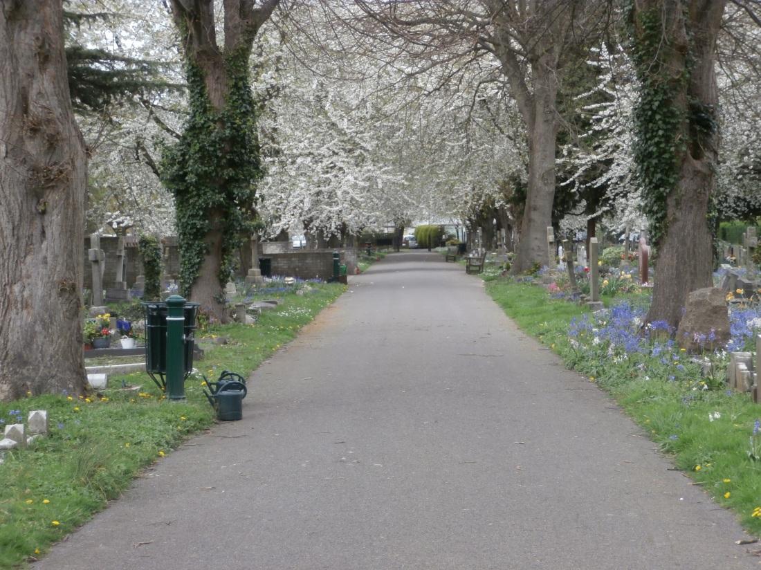Life returns, even in graveyards